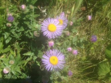 Pretty Purple Wildflowers