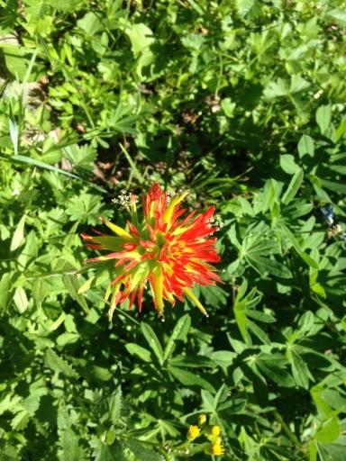 Red Spiky Flower