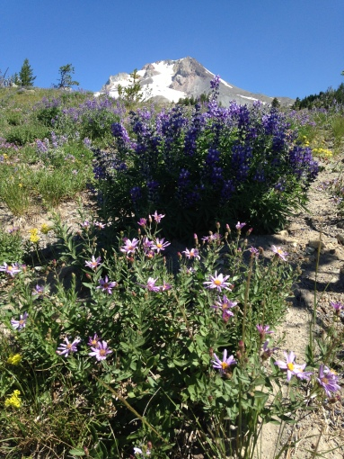 Amazing Wildflowers Everywhere!